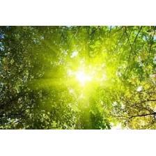 Солнечные ангелы - эфирные масла 25 мл
