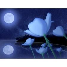 Лунные ангелы - эфирные масла 25 мл.